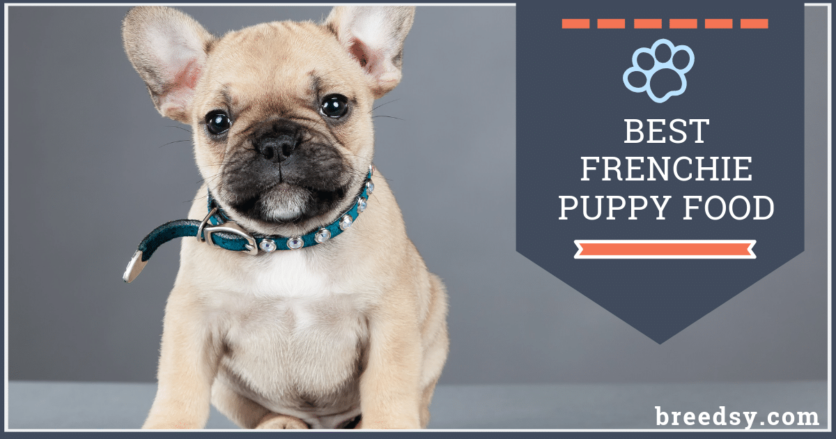 affordable french bulldog 8 best foods for a french bulldog puppy with our most 7712