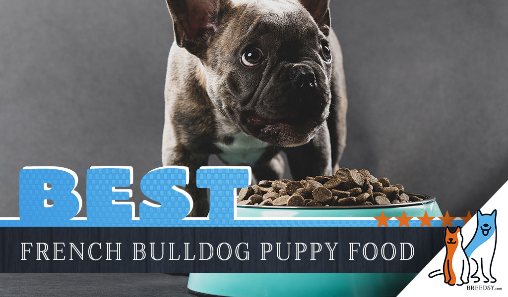 8 Best Foods For A French Bulldog Puppy With Our Most Affordable Pick