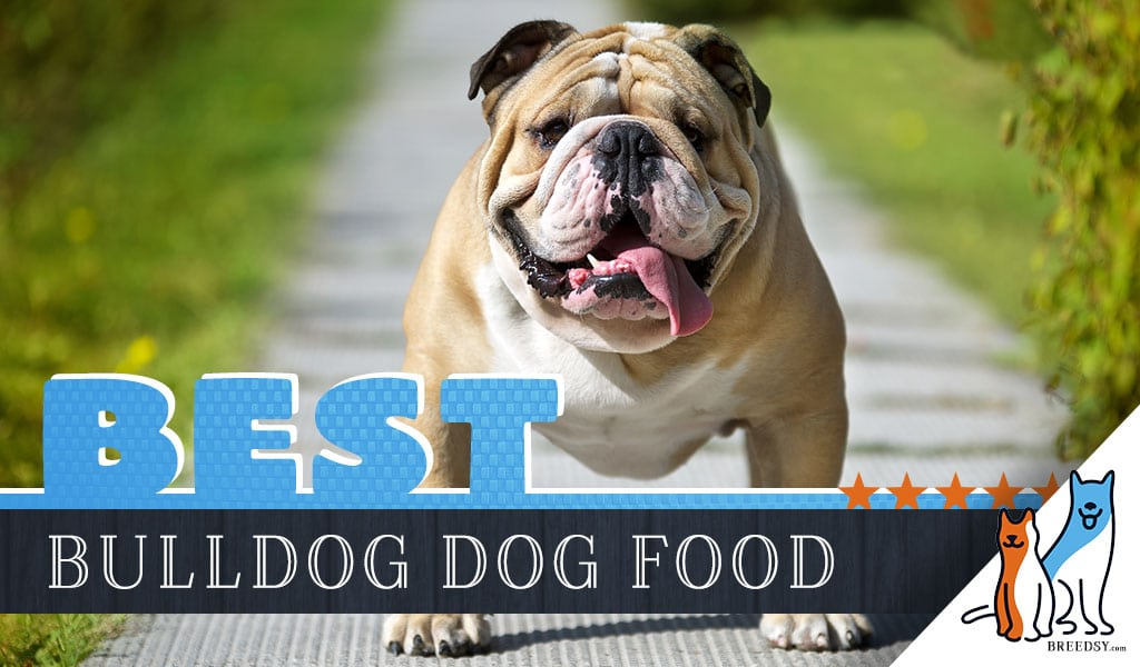 15 Best Dog Foods For Bulldogs Our 2021 In Depth Feeding Guide