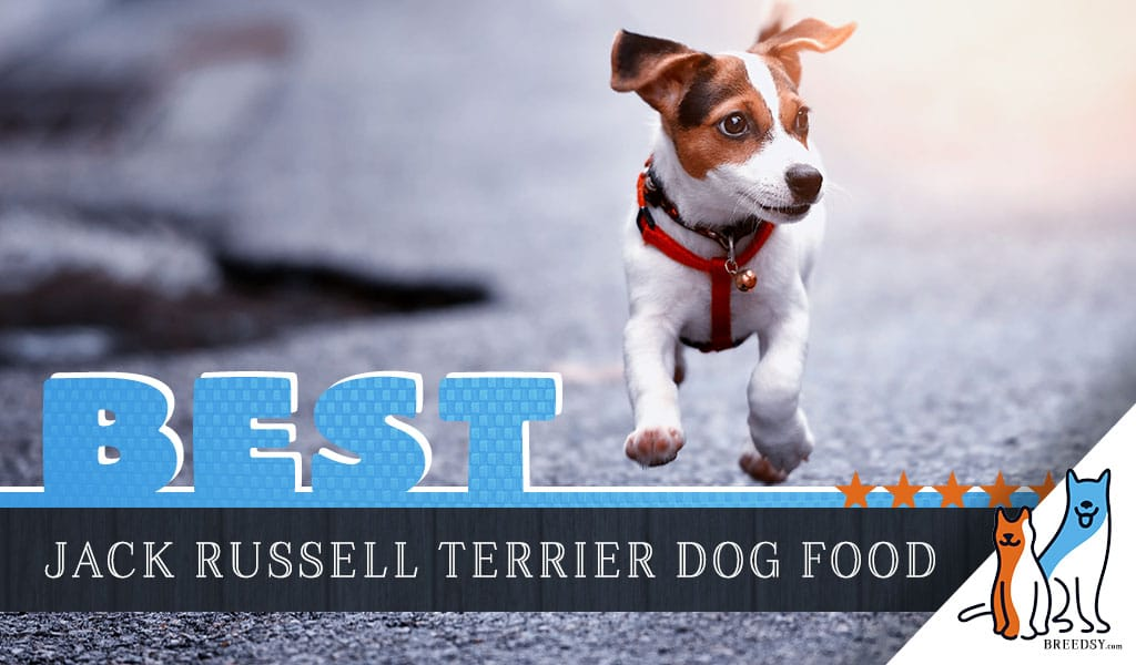15 Best Dog Foods For Jack Russell Terrier Our 2020 Feeding