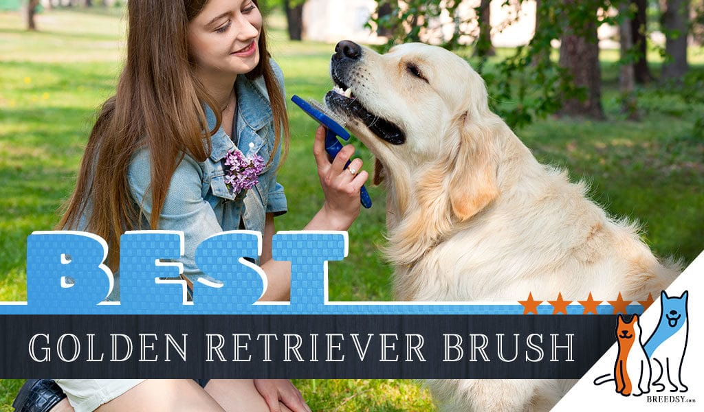 7 Best Brushes For Golden Retrievers W